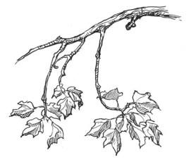 Branch2_sm1